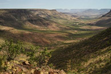 faune namibie