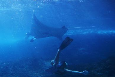 snorkeling indonésie