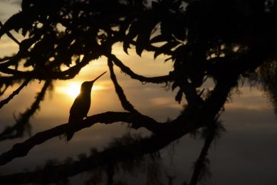 voyage nature costa rica observation faune photographie