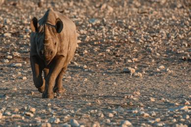 safari etosha hors sentiers battus