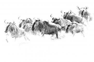 voyage naturaliste tanzanie grande migration gnous zèbres