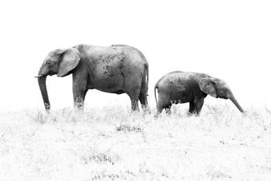 safari observation faune nature afrique tanzanie