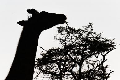 voyage photo tanzanie observation animalière