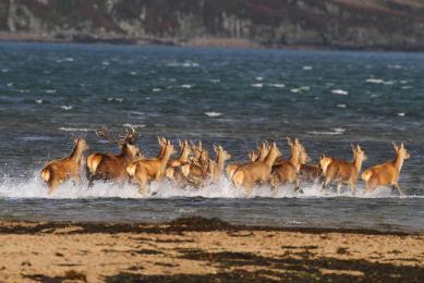 Ecosse Highlands voyage nature balade observation animalière