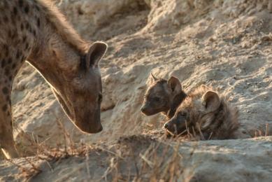 Safari Nature photo kenya-Tanzanie