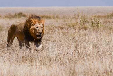 observation faune Kenya