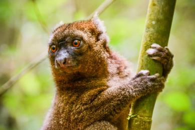 voyage madagascar observation animalière photographie
