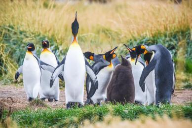 voyage exploration patagonie découverte faune chili expédition