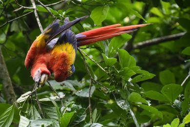 voyage photo singe costa rica observation faune flore