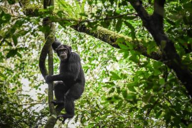 Voyage photo bec en sabot Ouganda