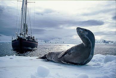 voyage Antarctique navigation voilier expédition