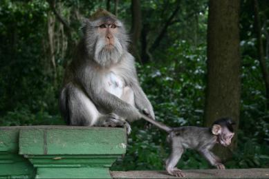 Voyage famille Bali