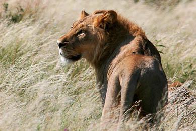 safari hors des sentiers battus nature botswana kalahari