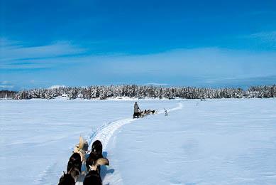Raid chien de traineaux Canada