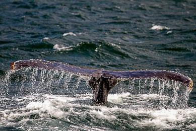 TREK Patagonie chili argentine exploration navigation darwin faune observation trek trekking detroit de magellan baleines manchots