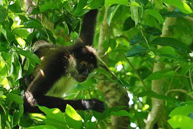 costa rica voyage original observation singe trek