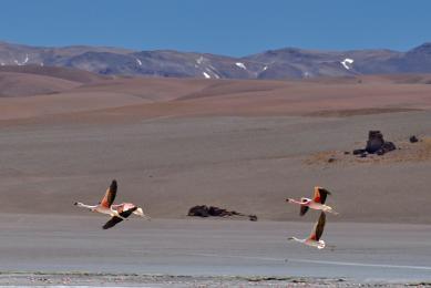 flamands salars argentine llullaillaco volcan sommet lagune