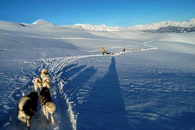 raid chiens de traineaux France Beaufortain
