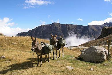 Trek randonnée France Ecrins balades en âne nature