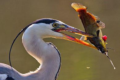 Voyage spécial photographie animalière Europe oiseaux