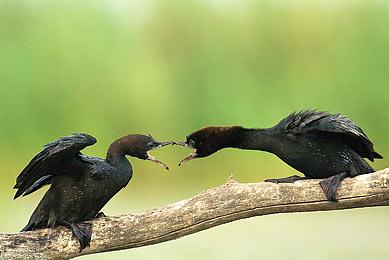 Hongrie parc national d'Hortobágy observation oiseaux affûts