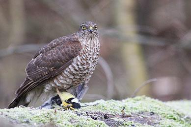Séjour photo Hongrie ornithologie rapaces nature