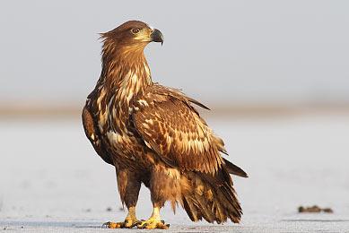 Hongrie parc national d'Hortobágy observation oiseaux photographie