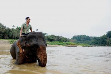 Voyage original au Laos rencontres immersion