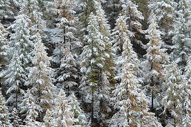 voyage spécialisé photographes amateurs nature Alpes Europe