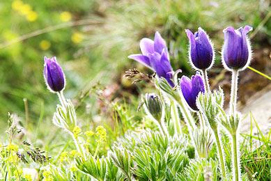 Parc national Grand Paradis photographie faune flore alpine