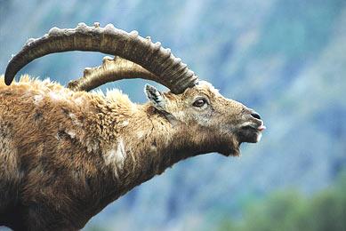 Italie voyage observation animaux nature montagnes randonnées