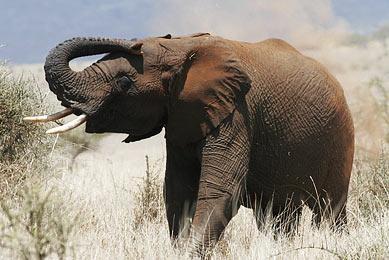 kenya safari meru maasai mara marche