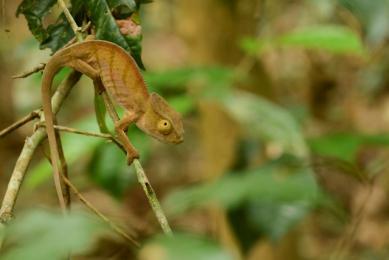 observation faune madagascar