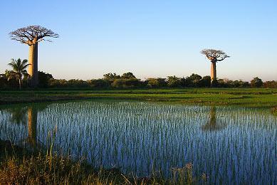 trek Madagascar sud  Makay