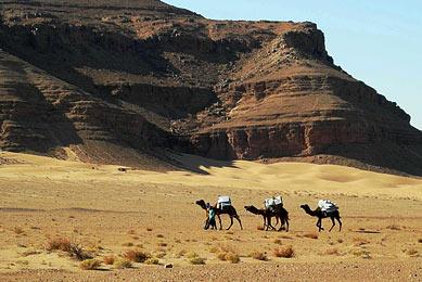 randonnée chamelière désert sud maroc