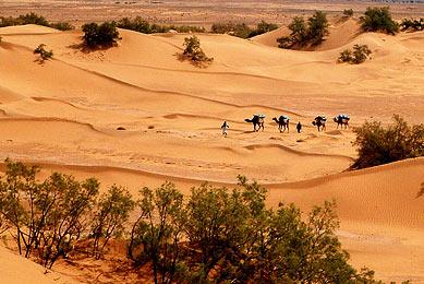 dunes oasis désert au Maroc