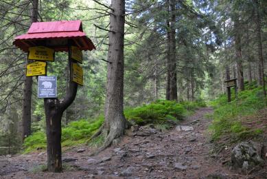 Ours faune flore Slovaquie forêt montagne voyage trek marche