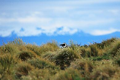 Observation animalière Patagonie Chili Argentine randonnée pampa