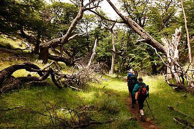 Trekking Patagonie argentine forêts exploration