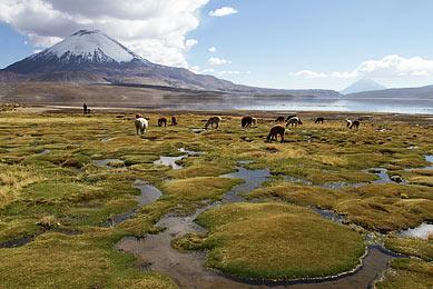 Volcan Parinacota Parc National Lauca Chili Bolivie Trekking Exploration Cordillère Andes