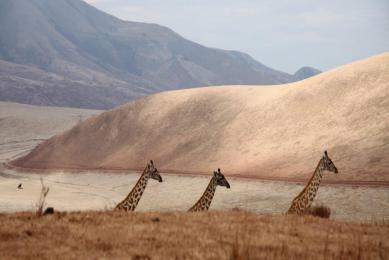 Safari Tanzanie