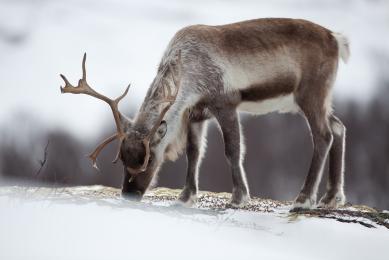 voyage photo aurores boreales norvege cercle polaire rennes