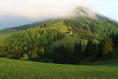 voyage naturaliste observation ours Slovaquie montagnes