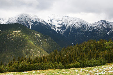 où voir ours brun? voyage nature observation photographie