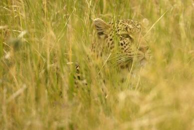 safari maasai mara