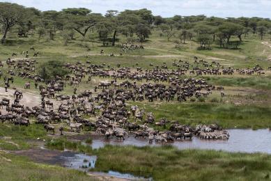 safari Maasai Mara Kenya